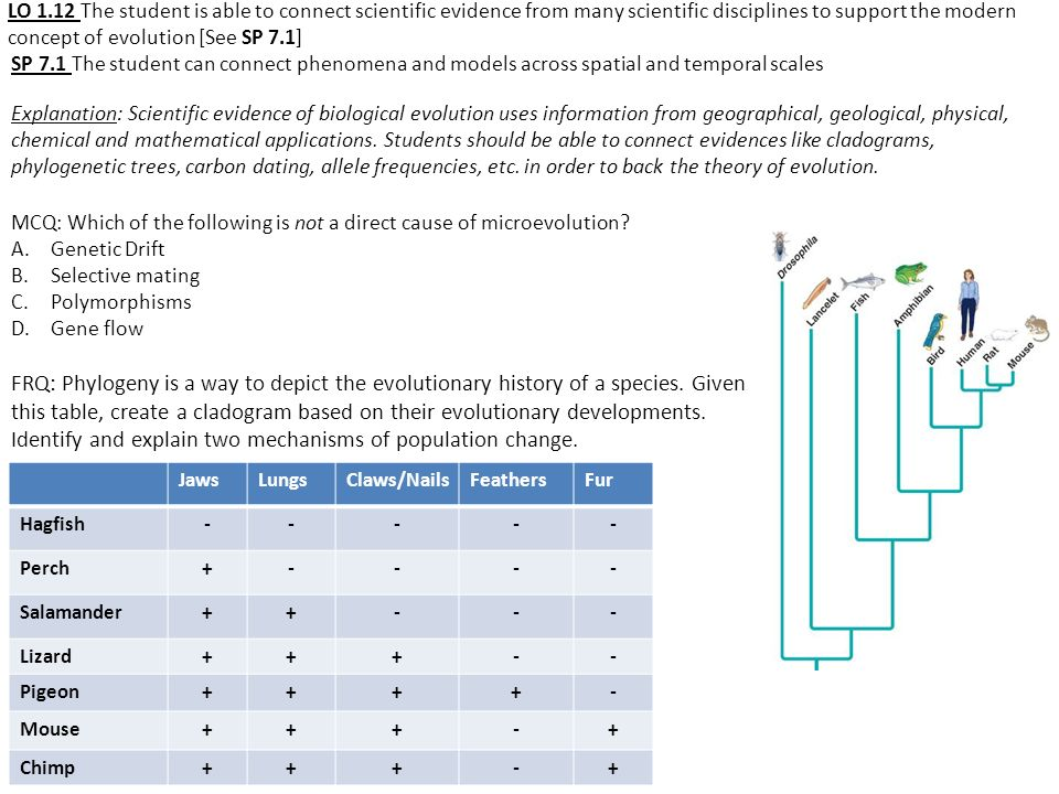 LO 1.12 The student is able to connect scientific evidence from many scientific disciplines to support the modern concept of evolution [See SP 7.1]